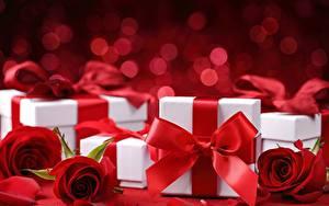 Фотографии Роза Коробки Подарок Бантики Красная