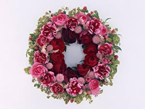 Картинка Розы Гвоздики Белый фон Дизайн Цветы