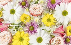 Фотография Розы Хризантемы Альстрёмерия цветок
