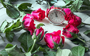 Фотографии Роза Часы Красный