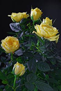 Фотографии Розы Крупным планом На черном фоне Желтый