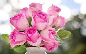 Обои Розы Вблизи Розовая Цветы