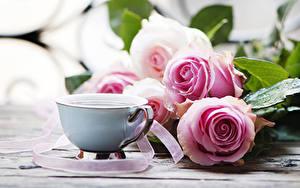 Картинки Розы Кофе Чашке Розовый цветок