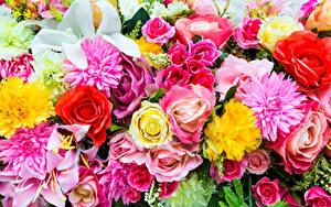 Картинки Роза Георгины Лилии Крупным планом цветок