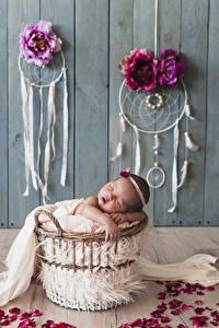 Фото Роза Ловец снов Доски Стенка Младенца Спят Лепестки ребёнок