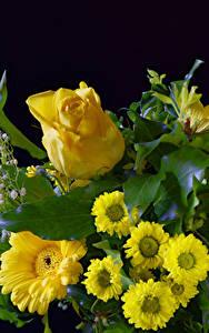 Картинка Роза Герберы Хризантемы Черный фон Желтая