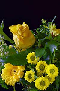 Картинка Роза Герберы Хризантемы Черный фон Желтая Цветы