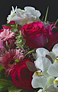 Картинки Розы Гербера Орхидеи цветок