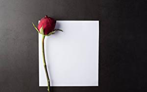 Фотографии Роза Сером фоне Шаблон поздравительной открытки Лист бумаги Бордовый цветок