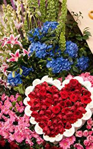 Обои Розы Гортензия Хризантемы Дизайн Сердечко Pasadena Цветы