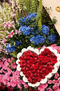 Обои Роза Гортензия Хризантемы Дизайн Сердца Pasadena цветок