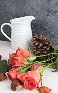 Фотографии Розы Кувшин Розовый Шишки Цветы