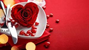 Фотографии Розы Ножик Скатерть День всех влюблённых Сердечко Красных цветок