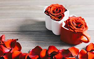 Картинки Роза Кружка Лепестки Красный Цветы