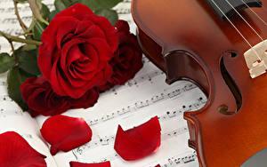 Фотография Розы Ноты Красный Лепестки Цветы