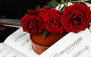 Фотографии Розы Ноты Втроем Бордовый Цветы