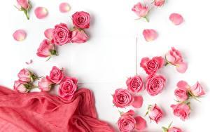 Картинки Розы Розовые Белом фоне Шаблон поздравительной открытки Цветы