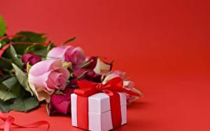 Фотографии Розы Красный фон Коробка Ленточка Подарок
