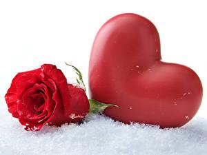 Обои Розы Снег Сердца Красный