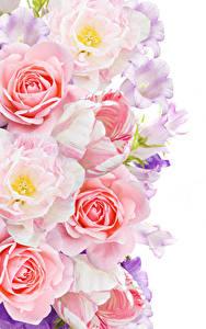 Фотография Розы Тюльпаны Колокольчики - Цветы Белый фон