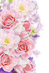 Фотография Розы Тюльпаны Колокольчики - Цветы Белый фон Цветы