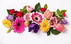 Картинка Розы Тюльпаны Гербера Белом фоне