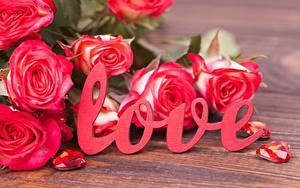 Картинки Розы День всех влюблённых Английский Текст Красные Цветы