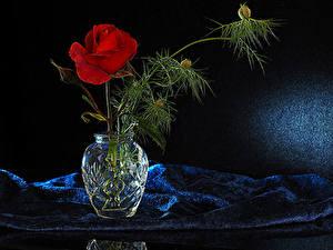 Обои для рабочего стола Роза Ваза Ветки Красная Цветы