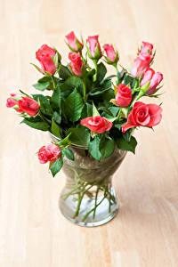 Обои Роза Вазе Розовая