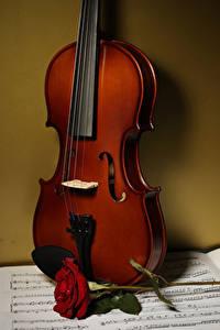 Фотографии Розы Скрипки Ноты