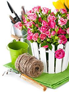 Обои Розы Белый фон Ведро Розовая Цветы