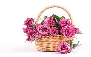 Картинки Роза Белом фоне Корзина Розовая