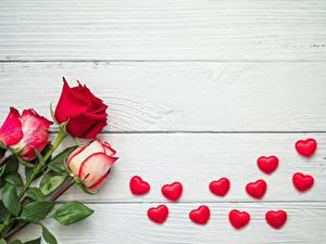 Картинка Розы Доски Сердце Шаблон поздравительной открытки Красных цветок