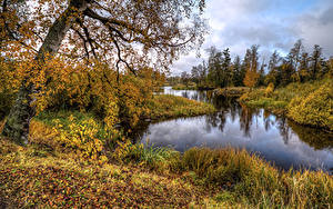 Фото Россия Осенние Речка HDRI Дерево Листва Vuoksa River Priozersk Природа