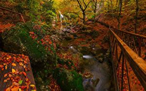 Фото Россия Крым Парки Водопады Мосты Осенние Камень Мох Листва Ручей Природа