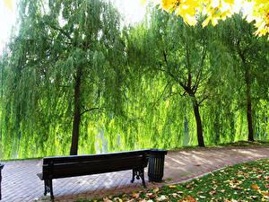 Картинки Россия Парки Скамейка Дерево Царицыно Природа