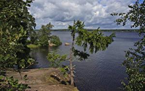 Фотография Россия Парки Берег Реки Ель Park Monrepos Vyborg Природа