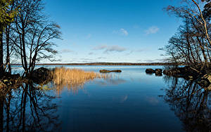Картинки Россия Парки Речка Деревья Park Monrepos Vyborg Природа