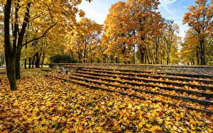 Фото Россия Санкт-Петербург Парк Осенние Листва Дерево Лестницы Park Ekaterinhof Природа