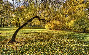 Картинка Россия Санкт-Петербург Парк Осень Дерева Листья Park Ekaterinhof Природа