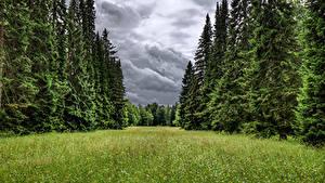 Картинка Россия Санкт-Петербург Парк Ели Траве Lomonosov Oranienbaum park