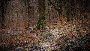 Фотография Шотландия Леса Дерева Мох Иней Galloway Природа