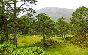 Картинка Шотландия Гора Дерево Траве Achagate
