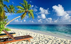 Фотографии Море Тропики Пальмы Пляжа Лежаки Природа