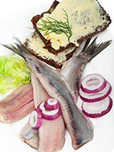 Фотографии Морепродукты Рыба Лук репчатый Хлеб Белым фоном Масло Пища