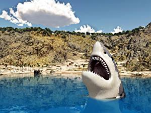 Фото Акулы Море животное 3D_Графика