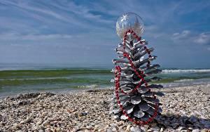 Картинки Ракушки Море Новый год Шишки Природа