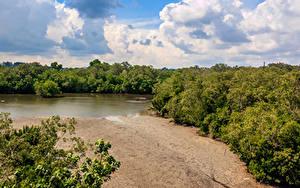 Фотография Сингапур Парки Озеро Леса Песок Sungei Buloh