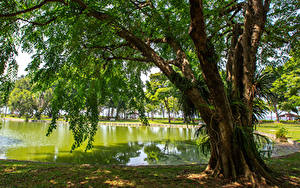 Фотография Сингапур Парки Пруд Дерево East Coast Park