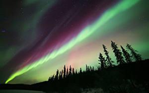 Фотография Небо Пейзаж Полярное сияние Силуэта Дерево Космос Природа